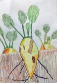 """""""Zuckerrübe in der Erde"""", Oktober 2012, Farbstift auf Papier"""